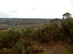 10-View-from-Hindhead-Common-towards-Beacon-Hill.JPG