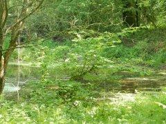 02-Rushmoor-pond.JPG