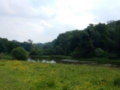 05-Great-Mead-ponds.JPG