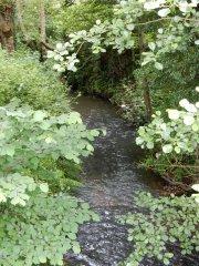 05-Upper-river-Rother.JPG