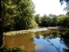 06-Upper-North-Pond-Shillinglee.JPG
